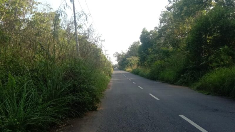 Tebas Bayang Dinilai Minim, Semak Belukar Menjalar ke Jalan